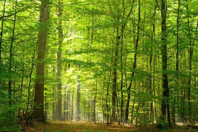 Прокурори не дозволили незаконно використовувати на Волині 44 гектари землі лісового фонду