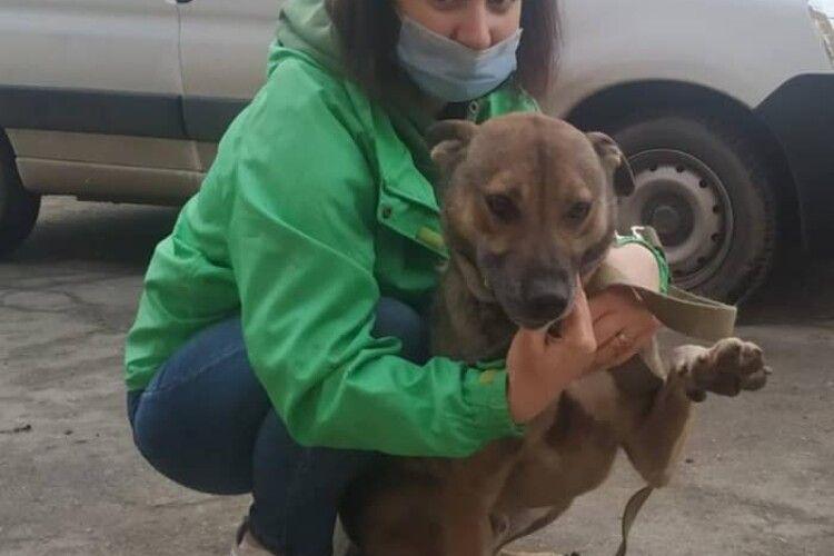 У Луцьку собаче щастя вхопило за хвіст пса, який впродовж трьох років не міг знайти господарів (Фото)