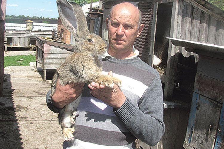 Волинянин, який вирощує кролів 39 років, дає поради, як правильно доглядати за тваринами