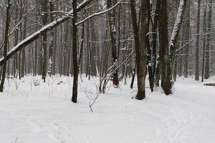 «Мамо, будь ласка, не треба!»: релігійна жінка у лютий мороз завела голими в ліс трьох дітей
