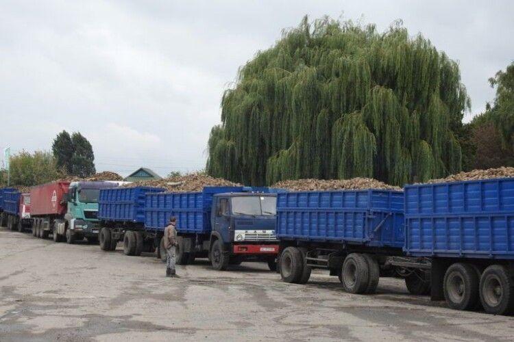 До Гнідавського цукрового заводу вишикувались вантажівки з цукровими буряками (Фото)