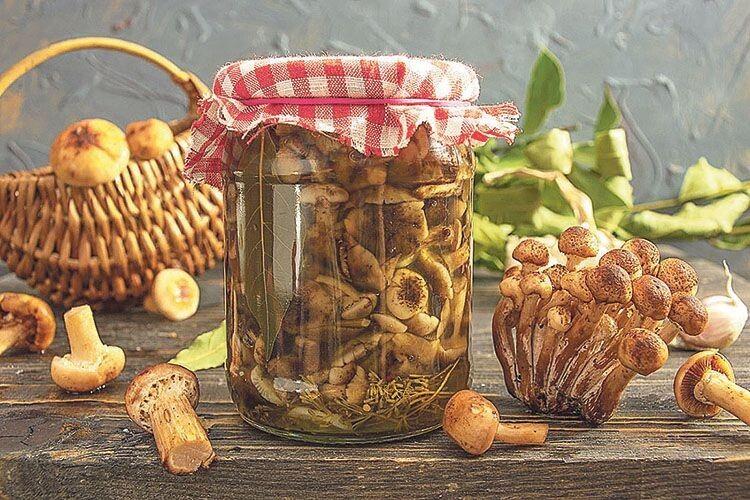 У лісі ще є: топ-4 рецепти з опеньок