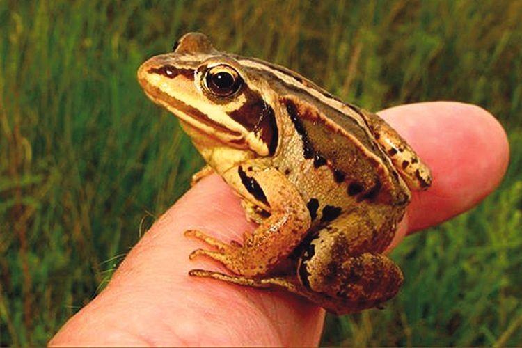 Як жаби із сільської канави «підняли» бюджет громади