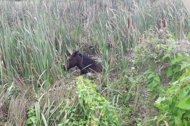 На Волині врятували коня, який пробув в меліоративному каналі три дні (Фото)