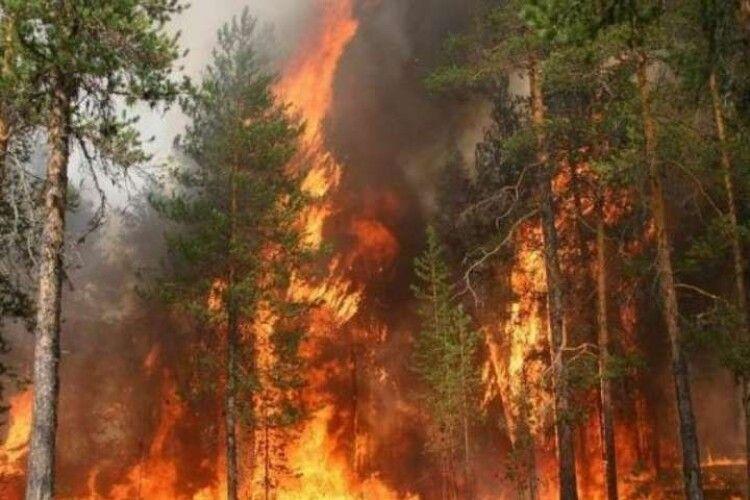 У 2020 році в Україні згоріло у 40 разів більше лісу, ніж минулоріч