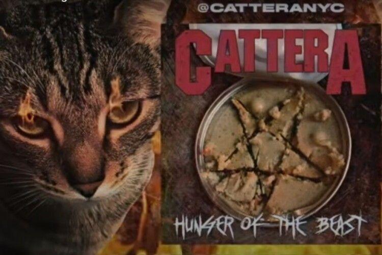 З'явився рок-гурт Cattera, де вокалістом став кіт (Відео)