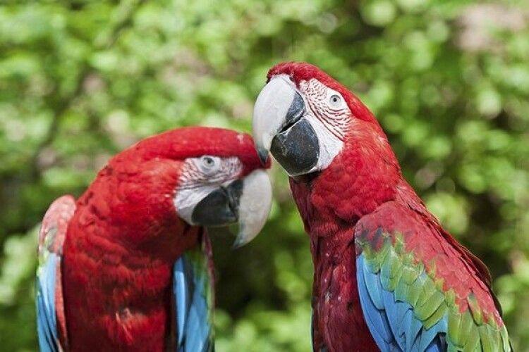 У Луцькому зоопарку переконані, що їхніх папуг поцупили злодії на колесах