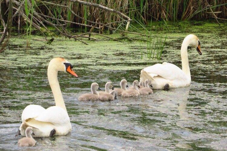 Лучани вимагають надати заповідний статус ставкам в заплаві річки Омелянівка