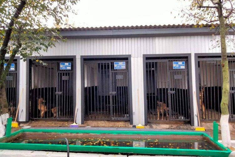 У колонії на Волині планують мати найкращий розплідник  для утримання службових собак (Фото)