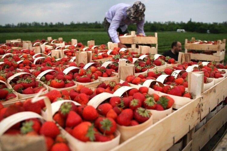 У Польщі фермер продавав українцям «липові» запрошення на заробітки