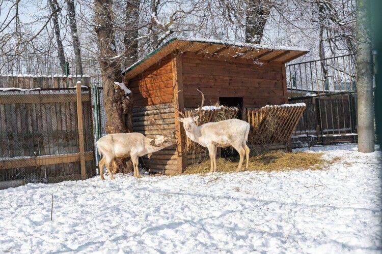 Лучан запрошують відсвяткувати день закоханих у зоопарку: що там буде