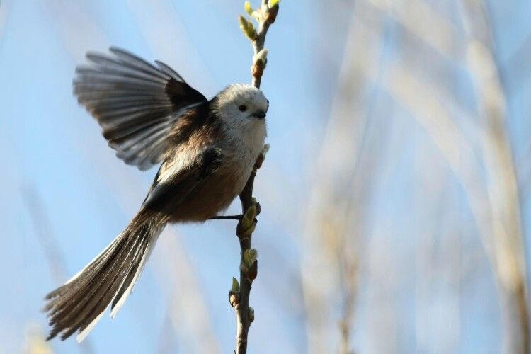 Фотомисливець влаштував між Рівним та Луцьком грандіозне полювання на птахів (фото)