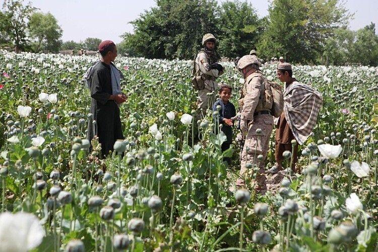 В Афганістані фермери виготовляють опіум за допомогою сонячних батарей