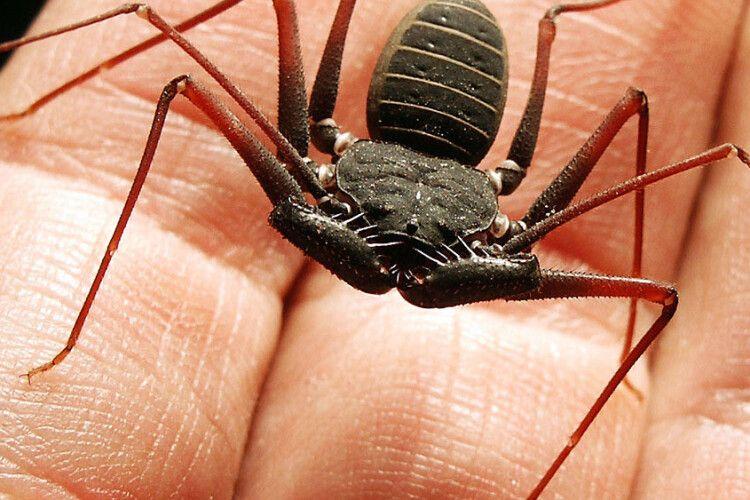 Швеція дозволила продаж комах у продуктових магазинах
