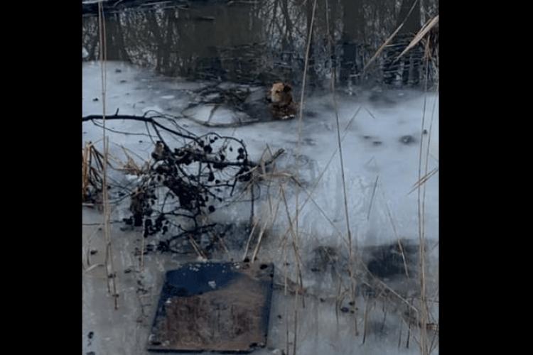 У Луцьку пса, який тонув у річці, врятував німий чоловік (Відео)