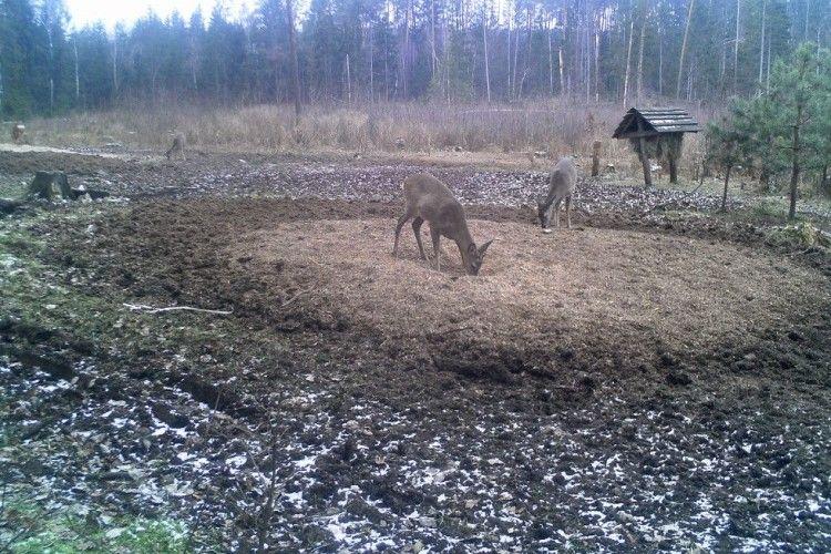На Маневиччині показали, як підгодовують диких тварин
