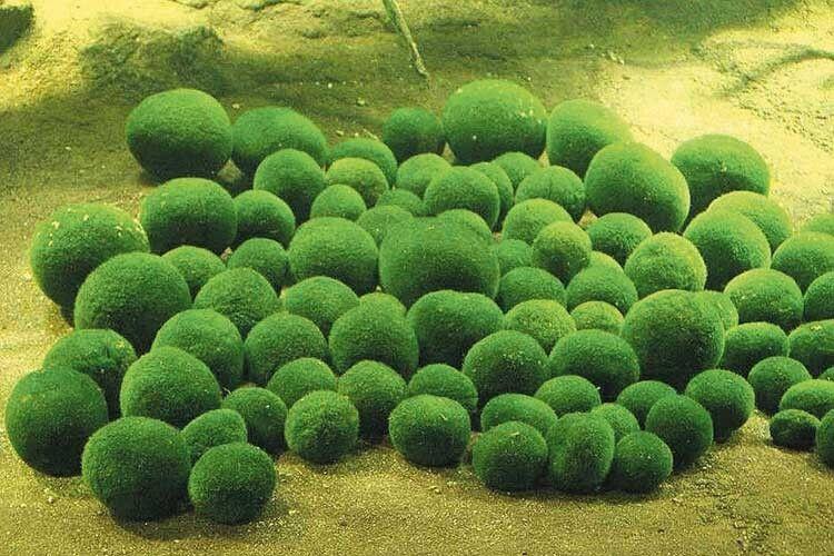 85мішків ізунікальними світязькими водоростями хотіли вивезти закордон?