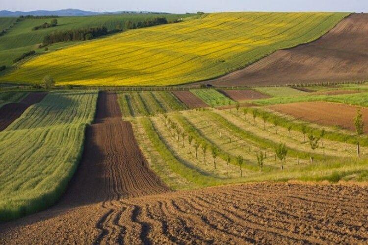 На Волині у фермерського господарства заберуть 50 гектарів землі