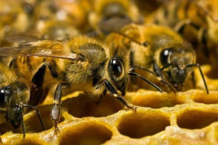 Зеленського просять підтримати бджолярів