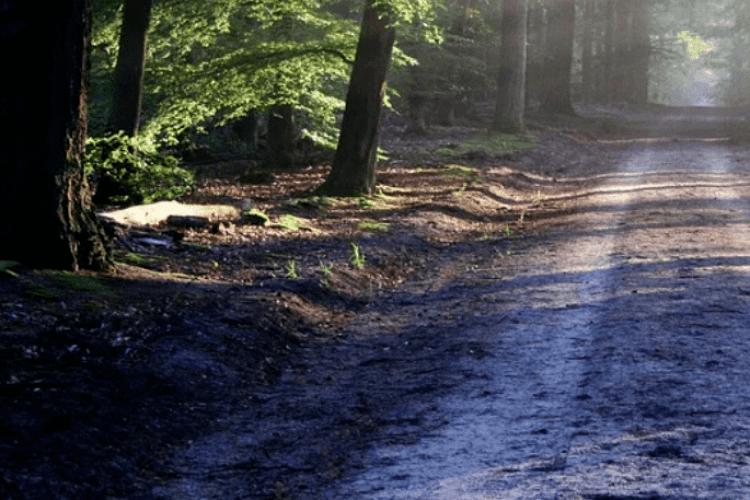 У лісі, де вбили Гонгадзе, зґвалтували 16-річну дівчину