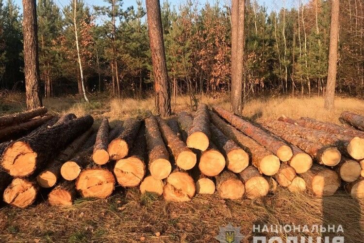 Замість ростити й берегти – рубали сосни та дуби: у двох лісництвах викрили зухвалих лісокрадів (Фото)