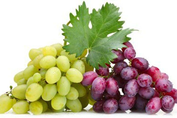 Запахла осінь  стиглим виноградом…