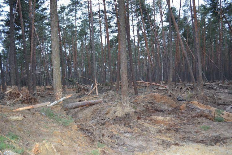 В обласній раді обговорять виділення земельних ділянок у Маневицькому районі
