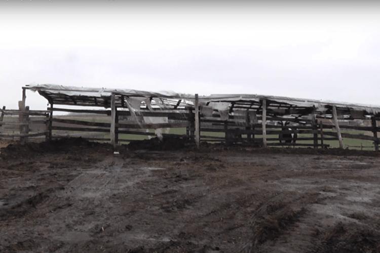 На Волині на фермі викопали людський скелет (Відео)