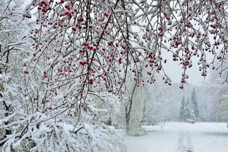 У неділю Волинь засипле снігом