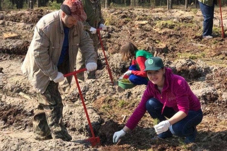 Ратнівські держслужбовці садили ліс