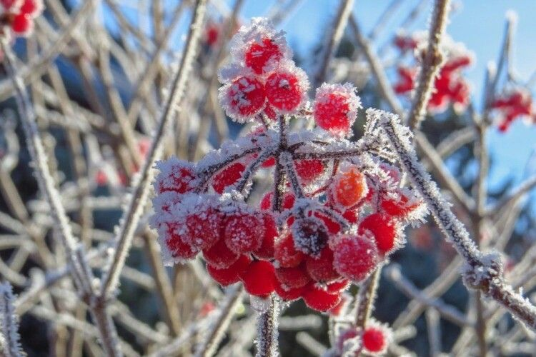 Погода на понеділок, 20 січня: вже й Водохрещі минули – а тріщати ще й не починало...