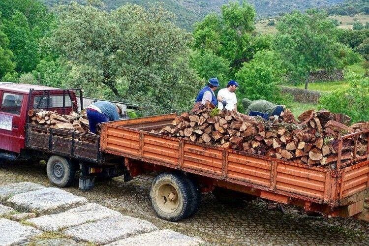 60-річного волинянина спіймали з сумнівною деревиною