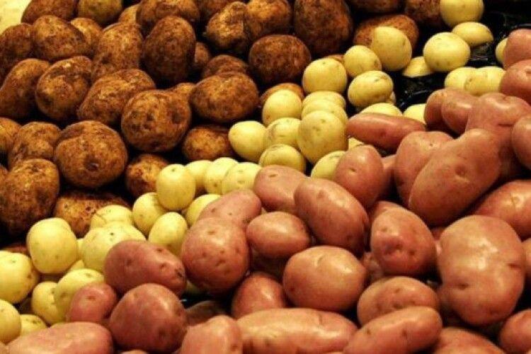 Україна імпортує картоплю з Молдови, а експортує на Балкани і в Білорусь