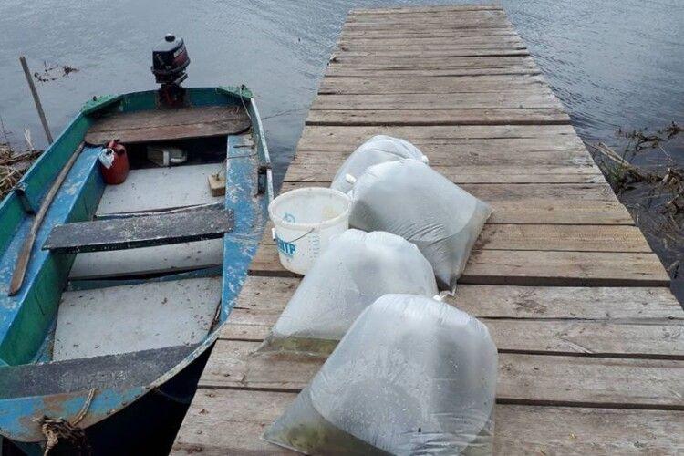 На Волині з ініціативи рибалок-любителів у Хрінницьке водосховище випустили 20 тисяч щученят (Фото)