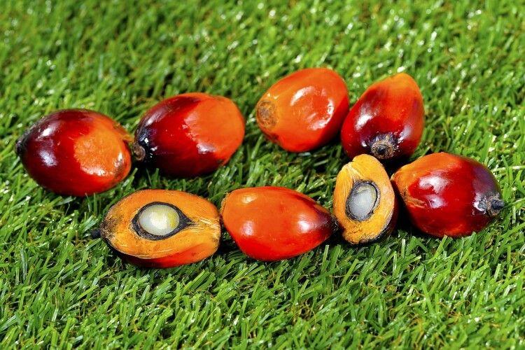 Україна б'є рекорди з імпорту пальмової олії