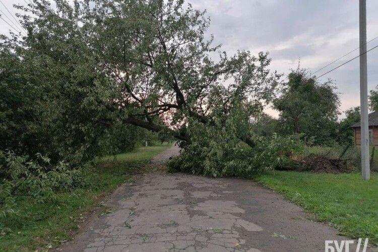 Позривало дахи і повалило дерева: у громаді на Волині вирувала негода (Фото)
