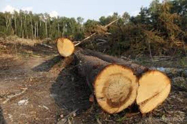 Двох волинян з другого разу зловили на незаконній рубці лісу