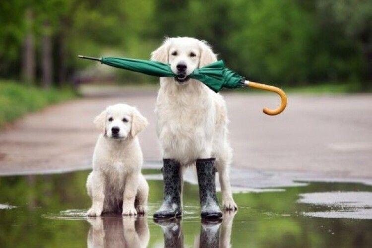 Погода на п'ятницю, 24 вересня: на Волині теплішатиме під акомпанемент дощу