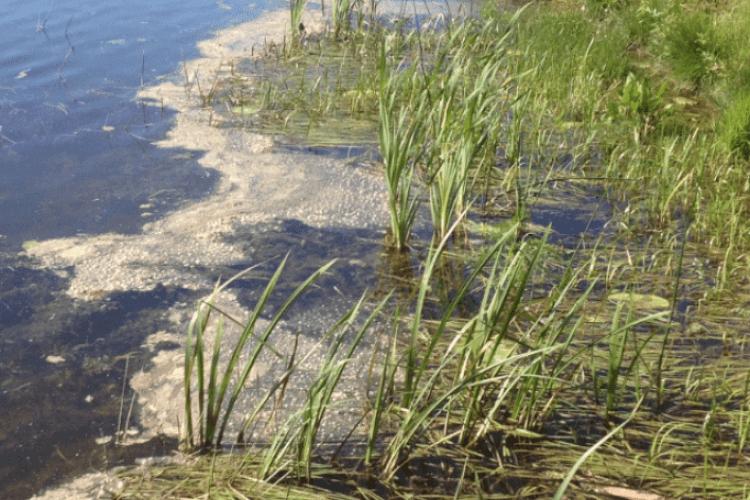 З'явилася петиція до Волинської ради про нечисту річку Турію