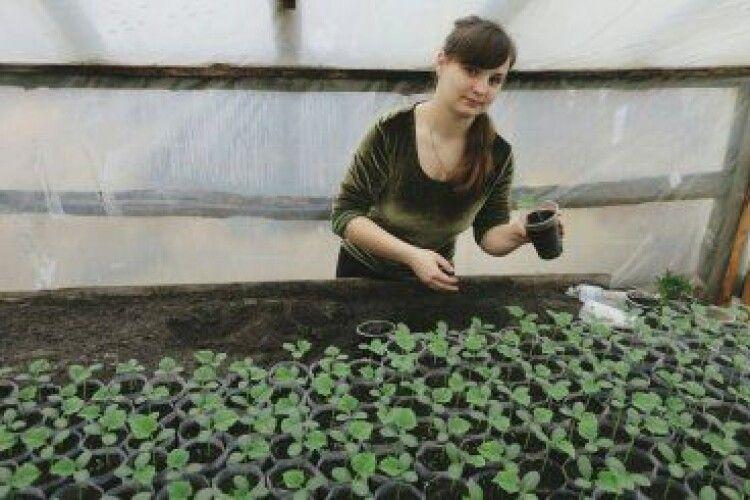 Подружжя волинян розповіло секрет вирощування смачних і натуральних огірків