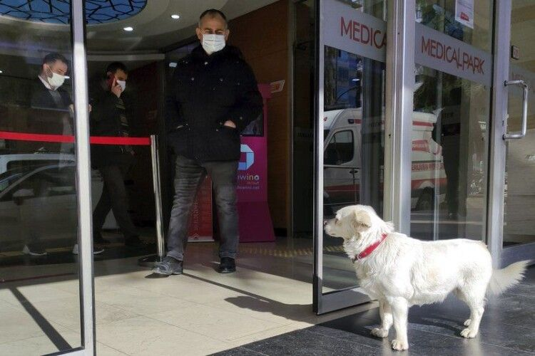 Пес щодня приходив до лікарні та чекав на свого хазяїна