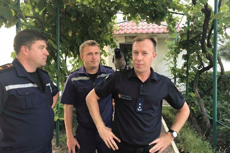 У рятувальників Чорноморська з'явився новий колега – ворон Гідрант