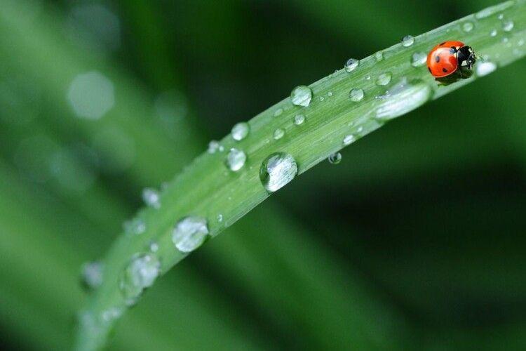 Погода на вівторок, 9 червня: короткочасні дощі, місцями грози