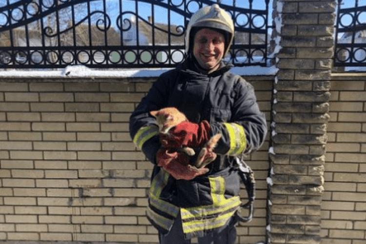 У місті на Волині з дерева зняли кішку, яка три дні не могла злізти