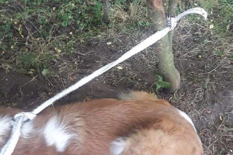 У лісі на Волині знайшли знесиленого пса, якого нелюд прив'язав до дерева (Фото)