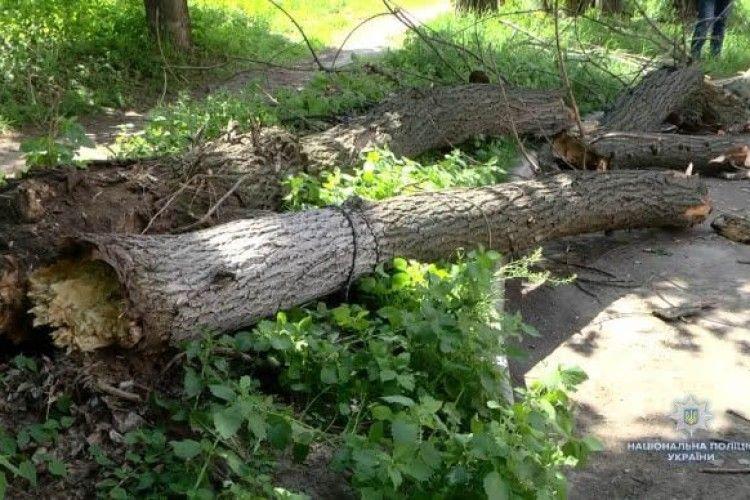 На гурт другокласників упало величезне дерево – четверо травмованих