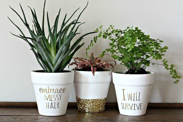 Молодим рослинам грунт міняють щороку