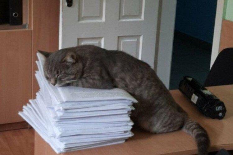 У Чернівцях комунальники влаштували кота на роботу