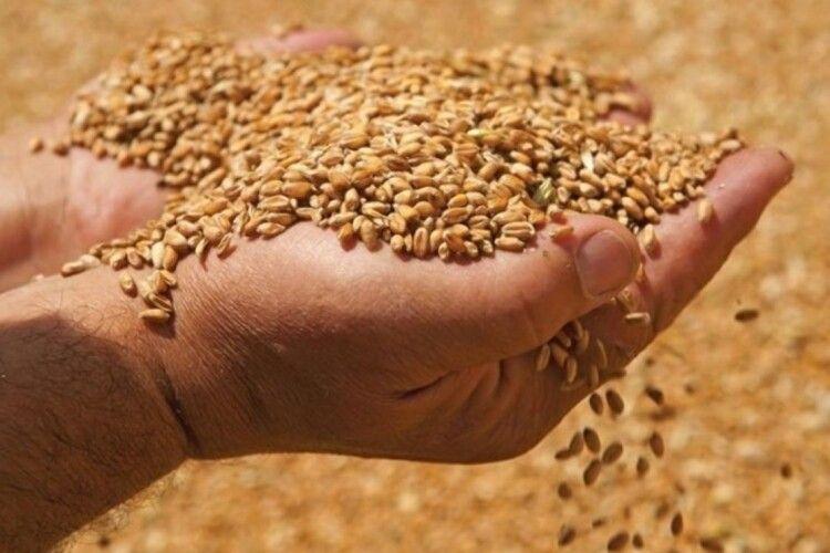 Вперше в історії України сорти пшениці вітчизняної селекції досягли врожайності 140 ц/га