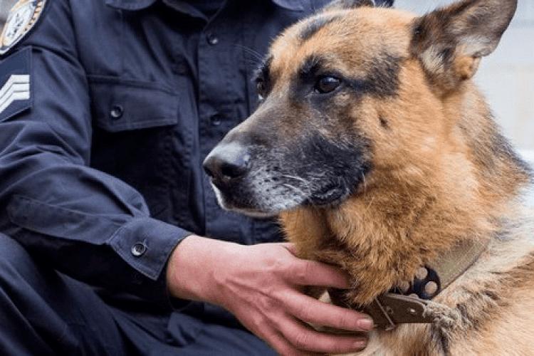 У Луцькому районі службовий собака розшукав двох грабіжників